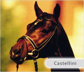 castellini_top